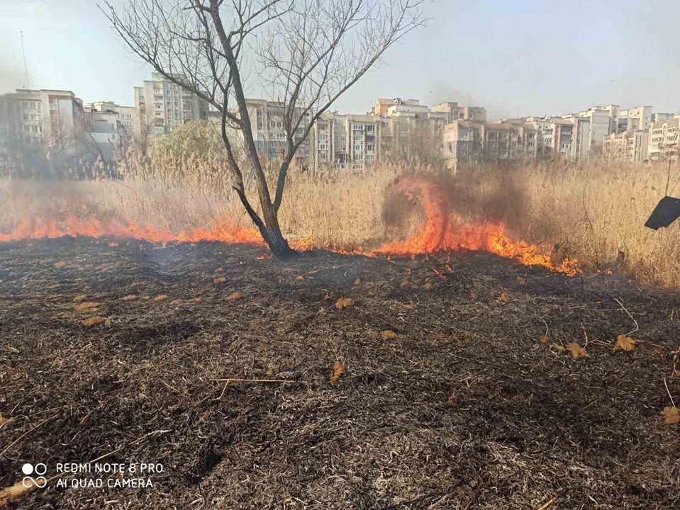В Червонограді знову випалюють сухостій