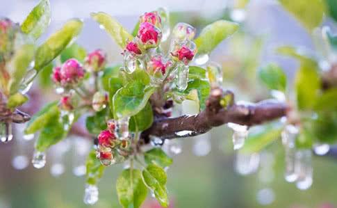 На Сокальщині буде вітряно та з морозом