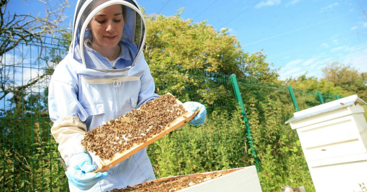 До уваги пасічників Львівщини: в області стартувала програма підтримки галузі бджільництва