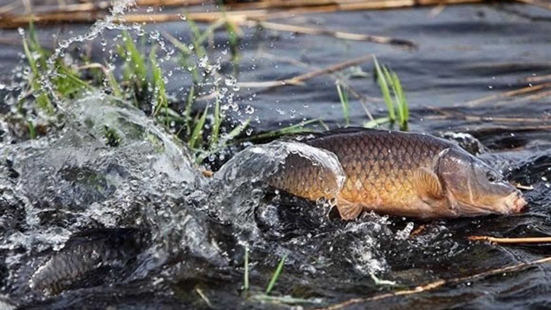 З 1 квітня заборонено вилов риби