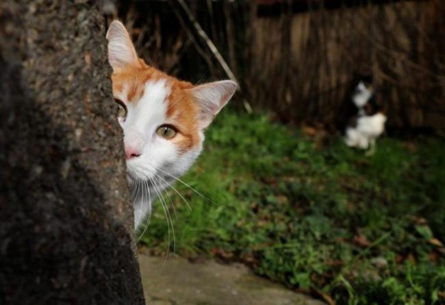 """За """"розваги"""" з кошеням хлопцю загрожує штраф 5100 грн або арешт на пів року"""