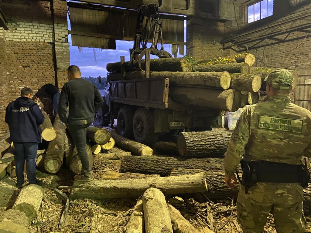 Крали ліс, доки не зловили – на Сокальщині група осіб незаконно вирубувала та експортувала за кордон лісопродукцію