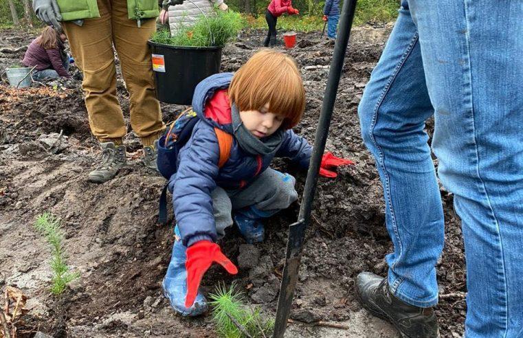 350 добродіїв  висадили вісім з половиною гектарів нових дерев на Жовківщині