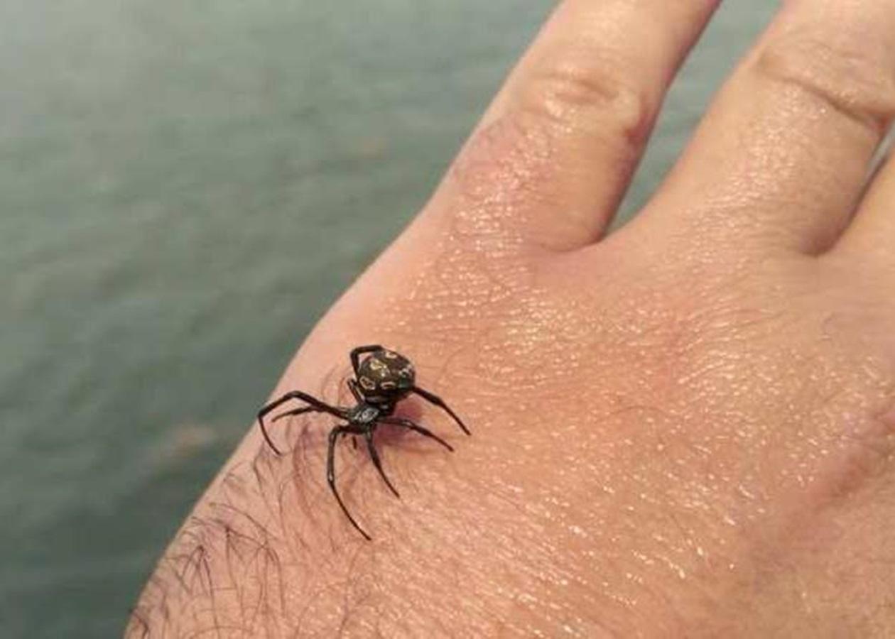 """""""Мене щось вкусило!""""- що треба знати про укуси павуків та комах?"""
