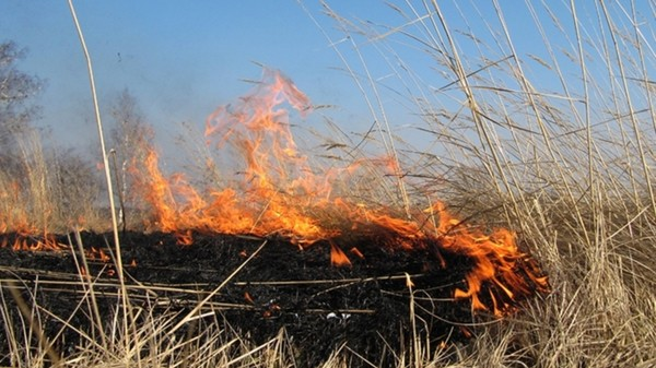 У Сокалі на Тартаківській вигоріло 50 м.кв сухостою