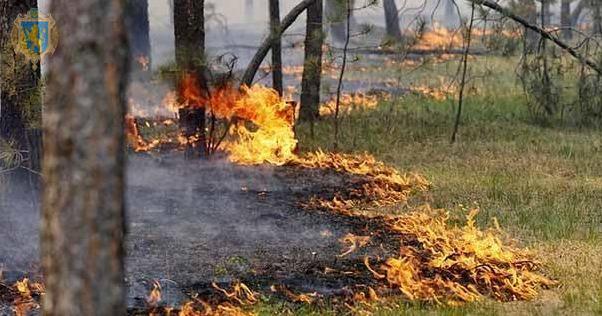 Не спалюйте суху траву і дотримуйтесь правил пожежної безпеки у лісах