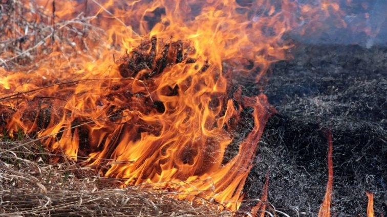 Підпал сухої трави: як оштрафувати порушника і куди звертатися