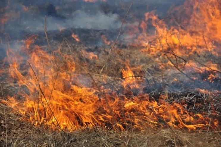 Весняні пожежі нищать країну. Лише за останні вихідні рятувальники м.Червонограда загасили 9