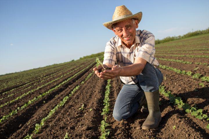 Верхована рада додала у календар ще одне свято – День фермера