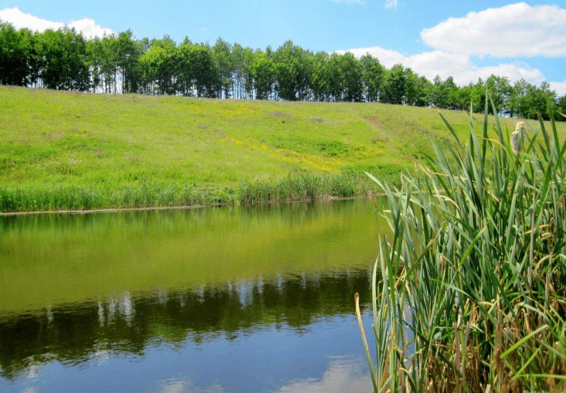 У липні на аукціон виставлять 17 ставків Львівщини, один з них в Стенятині на Сокальщині