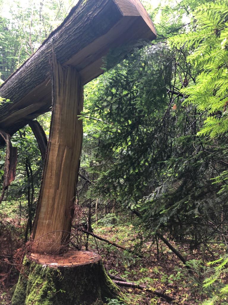 У Жовківському районі 26-річного чоловіка вбило дерево