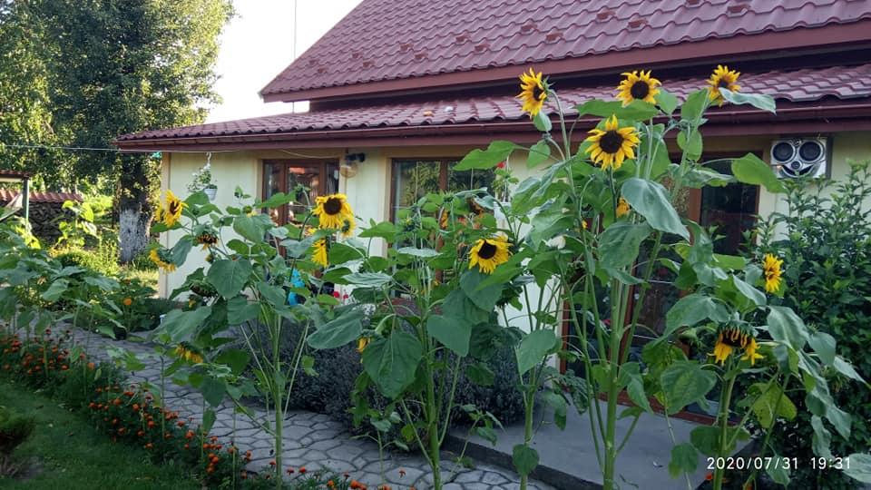 Коли доля цвіте соняхами і пахне чорнобривцями – подружжя з села Тартаків у своїй оселі та на подвір'ї зробили казку по-українськи