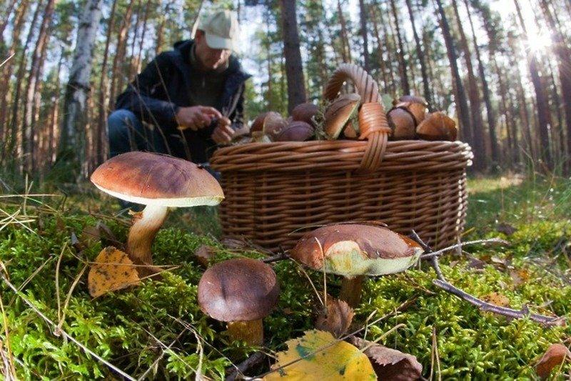 """""""Тихе полювання"""" за грибами може бути небезпечним. На Жовкіщині в лісі загубилась дівчина"""