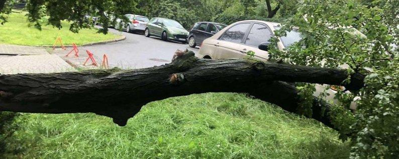 В Червонограді біля лікарні на двох чоловіків впало дерево під час обрізки гілля