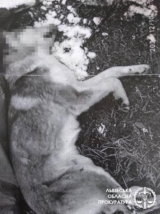 За вбивство собак жителю села Карів, що біля Белза, загрожує до 8 років ув'язнення