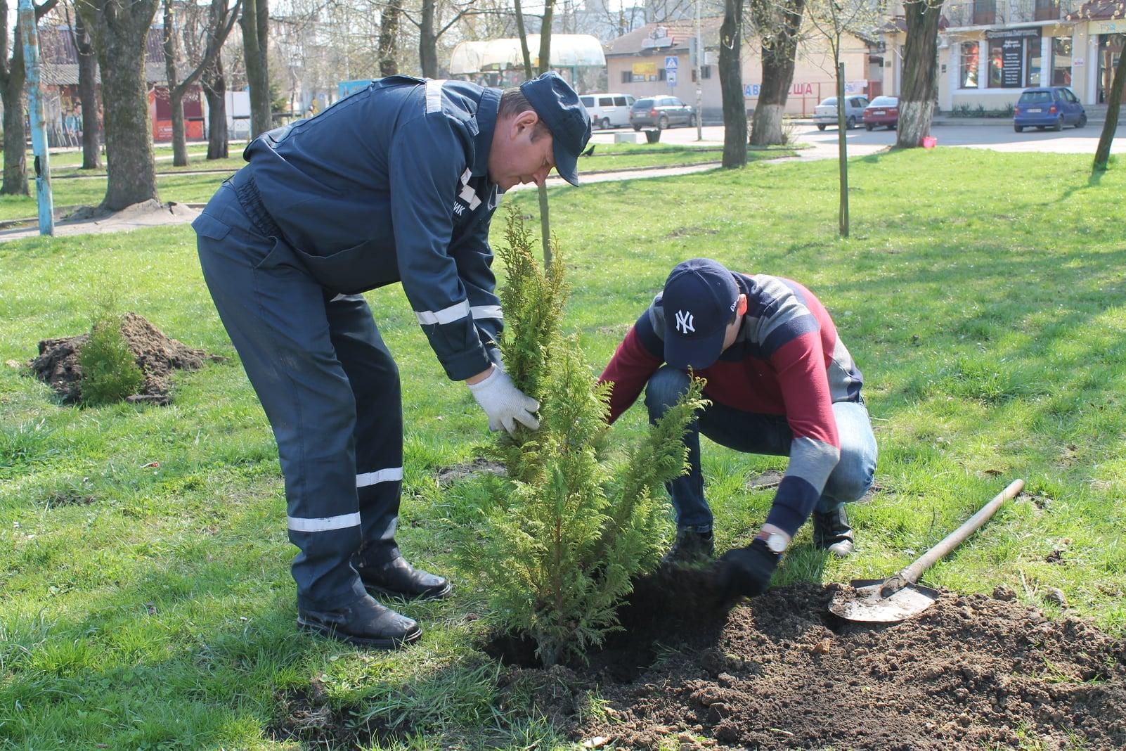 У Червонограді висадили близько 150 молодих дерев у сквері по вулиці Героїв Майдану