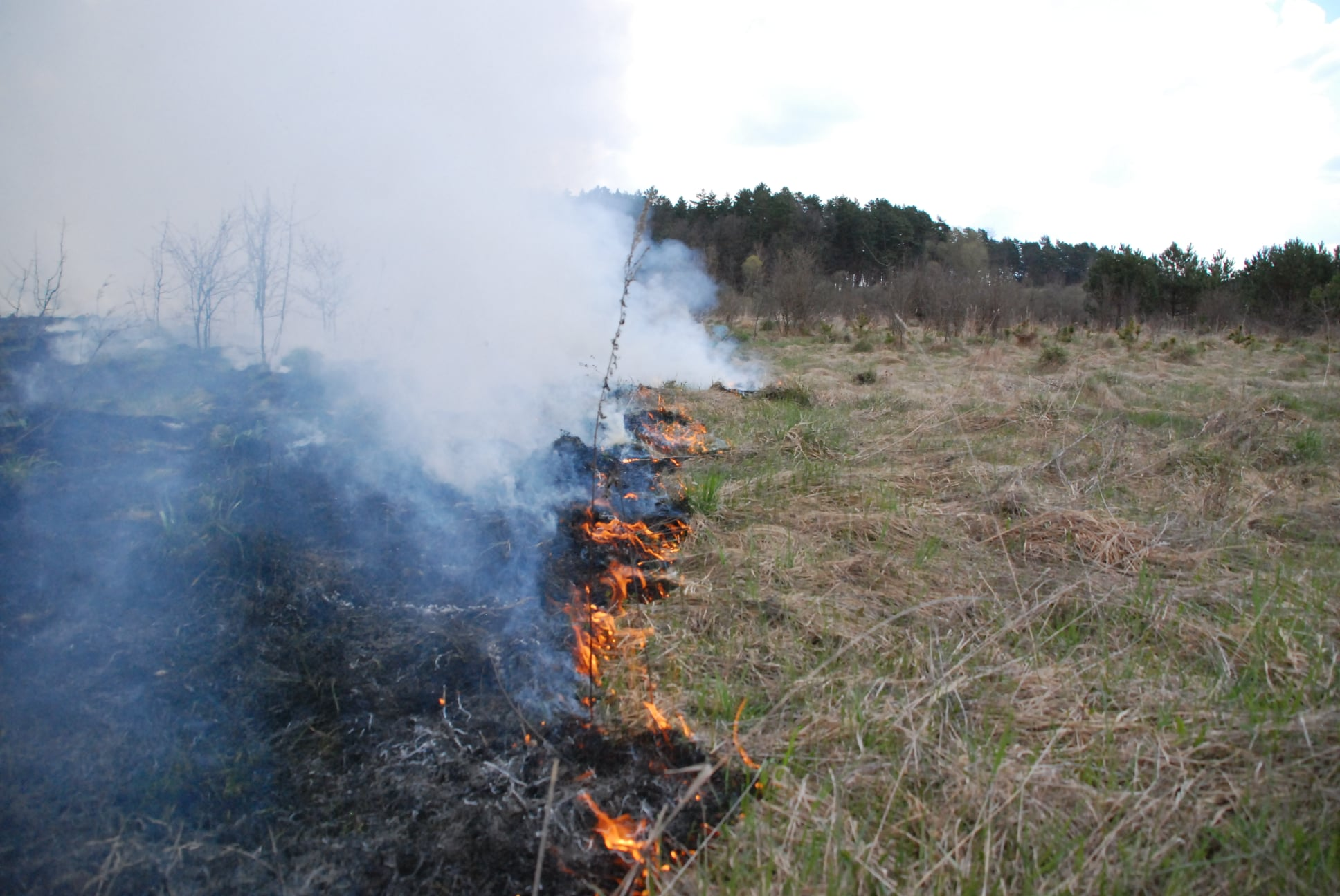 40 000 кв.м. – масштабна пожежа сухостою біля Белза