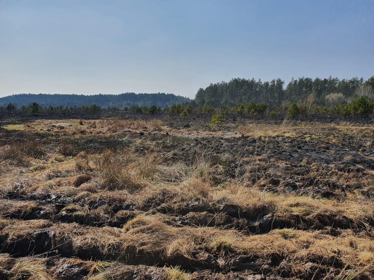 Лісівники закликають не випалювати суху рослинність