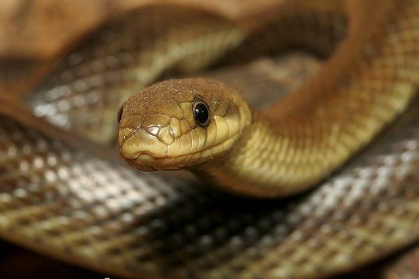 На Львівщині укуси змій стали частішими. Як вберегти себе на природі?