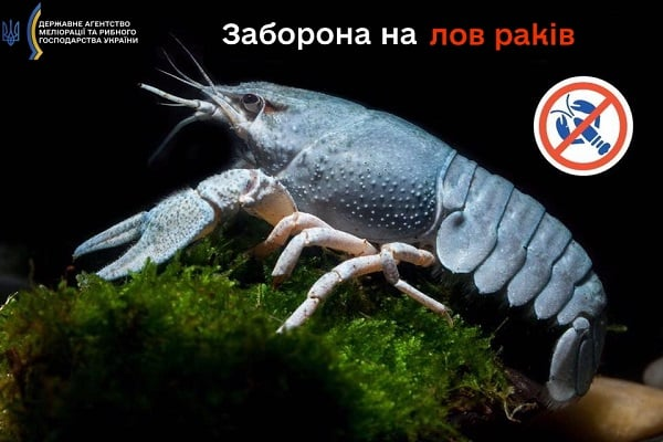 З 1 серпня на водоймах Львівщини заборонено вилов раків